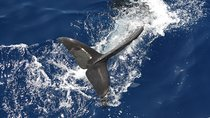 Small-group Cruise from the South Coast of Tenerife with Lunch, Tenerife, Day Cruises