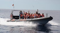 Whale and Dolphin Watching Tour from Funchal, Funchal, Swim with Dolphins