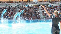 Zoomarine Admission Ticket with Shuttle Bus from Rome and VIP Gold Access, Rome, Other Water Sports