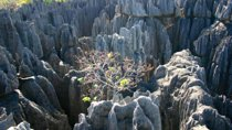 Grand Tsingy De Bemaraha and Baobab Avenue from Morondava 3 Day Tour