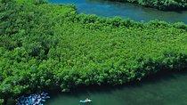 Best of Mangrove Lagoon Adventure, St Thomas, 4WD, ATV & Off-Road Tours