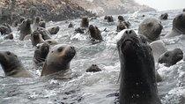 Besuchen Sie die Seelöwen auf den Palomino-Inseln