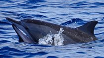 Shared Dolphin Encounter in Mauritius, Including Breakfast, Mauritius, Dolphin & Whale Watching