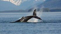Juneau Whale-Watching Adventure, Juneau, Dolphin & Whale Watching