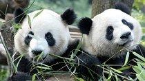 Half-Day Chengdu Panda Breeding Center Tour with Optional Baby Panda Holding, Chengdu