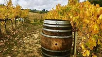 Chianti Wine and Vinci half day Tour from Lucca, Lucca, Food Tours