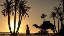 Sunset Camel Ride in the Palm Grove of Marrakech & Dinner-Show, Marrakech, Nature & Wildlife
