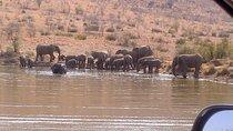 Pilanesberg National Park Day Tour from Pretoria, North West, Safaris