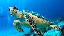 2 Tank Dive for Certified Divers in Los Cabos, Los Cabos, Scuba Diving