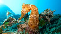 Discover Scuba (First Time Divers), Los Cabos, Scuba Diving