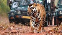 Ranthambore Wildlife Safari Tour Including Taj Mahal, Agra and Jaipur from Delhi