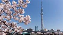 Japan Sakura Tour 11days, Tokyo, Day Trips
