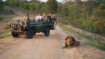 Safari Tour from Cape Town Including Lunch , Cape Town, Safaris
