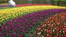 Keukenhof and Delft Tour from Brussels, Brussels, Cultural Tours
