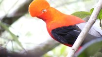 Private Bird-Watching Tour in Cloud Forest, Cali, Private Sightseeing Tours