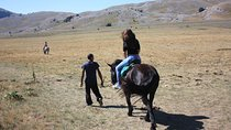 Horse-riding on the hills of Cerrano, Pescara, 4WD, ATV & Off-Road Tours