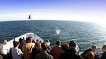 San Diego Summer Whale Watching Expedition Cruise