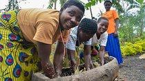 Rwanda Discovery Tour: Banana Beer and Banana Leaf Beehives, Volcanoes National Park, Beer &...