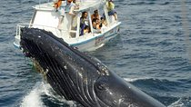 Bay of Samana Whale Watching Tour from Puerto Plata, Dominican Republic, Dolphin & Whale Watching