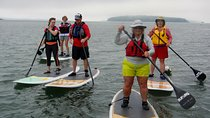 Stand Up Paddleboard Tour in Casco Bay, Portland, Other Water Sports