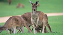 Half-Day Yanchep National Park & Crystal Cave, Perth, Attraction Tickets
