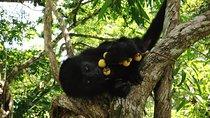 Howler Monkey Sanctuary Shore Excursion from Belize City, Belize, Nature & Wildlife