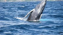 Samana Whale Watching Tour with Biologist Guide, Samaná, Dolphin & Whale Watching