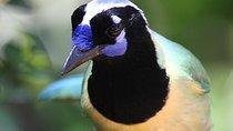 BIRD WATCHING ECOTOURS, Puerto Vallarta, Nature & Wildlife