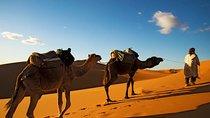 Camel ride Marrakech, Marrakech, Nature & Wildlife