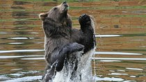 Sitka Super Saver: Whale-Watching Cruise and City Sightseeing Tour, Sitka, Ports of Call Tours