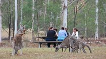 Blue Mountains Tour includes Scenic World Featherdale Lunch waterfalls kangaroos, Blue Mountains,...
