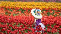 Tesselaar Tulip Festival: General Entry Ticket, Victoria, Attraction Tickets