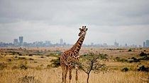 Nairobi National Park Safari, Nairobi, Safaris