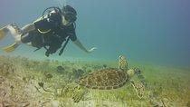 2 Tank Dive in Grand Case Saint Martin at 8:30 AM, Grand Case, Scuba Diving