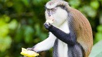 Grand Etang National Park Tour, Grenada, Full-day Tours