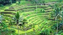 Private Ubud Full-Day Tour, Ubud, Full-day Tours
