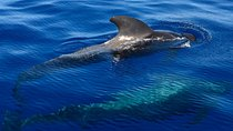 Small group whale watching 2 hour tour