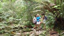 Guided Knysna Forest Elephant Hike, Port Elizabeth, Hiking & Camping