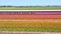 Keukenhof and Flowerfields, Volendam and Zaanse Schans with Small Group, Zaandam, Day Trips