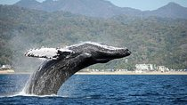 Whale Watching Day Trip From Punta Cana, Samaná, Dolphin & Whale Watching