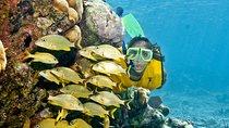 Full-Day Snorkel Extreme Adventure Tour from Riviera Maya, Playa del Carmen