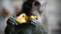 Best of Ubud: Waterfall, Rice Terraces & Monkey Forest, Ubud, Day Trips