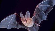 Hong Kong Wildlife Night Walking Tour: Bat Watching, Hong Kong SAR, Nature & Wildlife