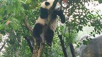Private Customizable Panda Trip in Chengdu, Xian, Cultural Tours