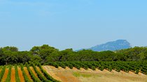 Full Day Pic Saint Loup Wine and Olive Tour with Lunch from Montpellier, Montpellier, Hiking &...