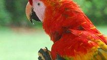 Amazonas-Dschungel-Tour im Corto Maltes Lodge