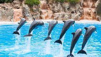 Aqualand and Dolphinarium 1-Day Ticket, Istanbul, Water Parks
