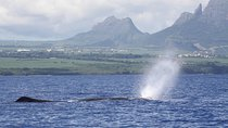 Full-Day Mauritius Marine Discovery Tour with Snorkelling from Grand Riviere Noire, Port Louis, Day...