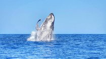Swimming with Wild Dolphins and Whale Watching from Port Louis, Mauritius, Dolphin & Whale Watching