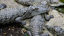 Meserani Snake Park Guided Day Tour in Arusha, Arusha, Full-day Tours